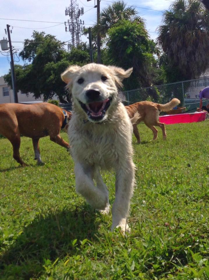 Puppy Manor | Where South Tampa's friendliest dogs come to play!